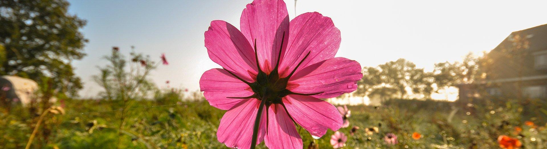 blomst-paa-mark-noergaards-hoejskole-1920-525